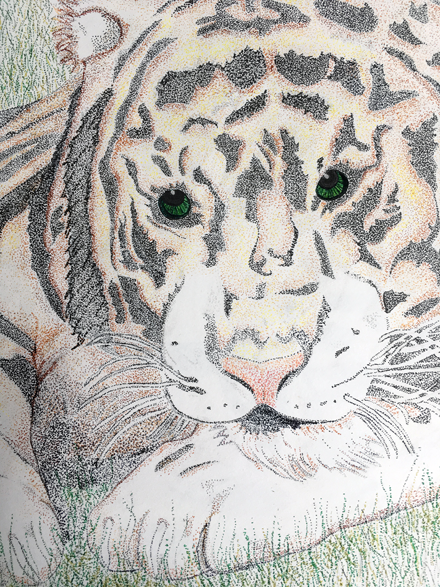 A close-up of a white tiger looking us in the eye. Shows its head and front paw. Looking calm, not ferrocious.