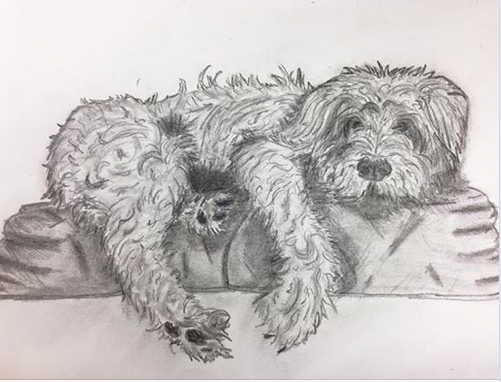 A smallish furry doggy (probably a mutt) is resting on a fluffy cushion. Black and white drawing, like the other previous dogs.