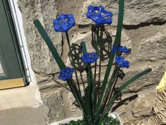 "A flower pot on the front door step has dark tealish green blades and stalks with 6 periwinkle blue ""flowers""."